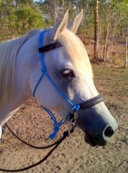 Feedback - LightRider Bitless Bridles