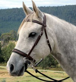 Bitless Bridles - What's the Difference? - LightRider